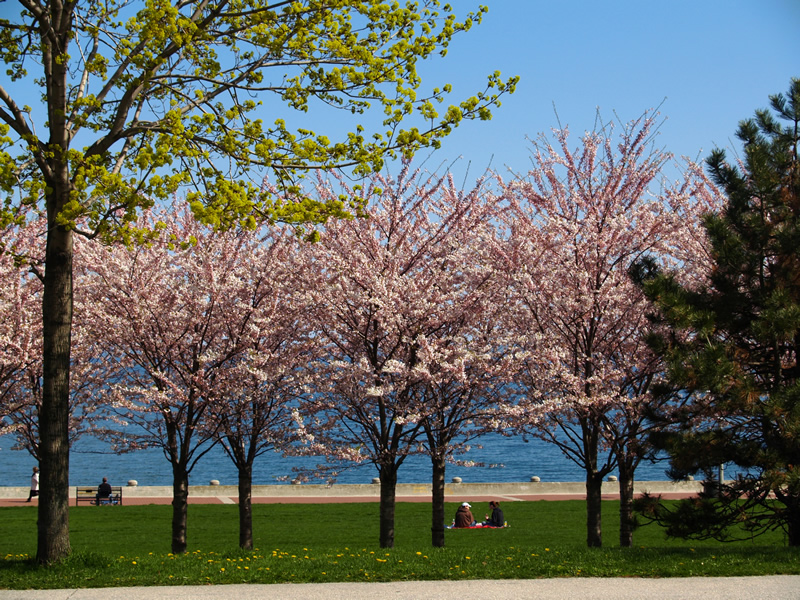 12 Blossoming near Lake _1013120.jpg