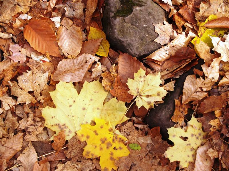 16 - Leaves Fall P1015982.jpg