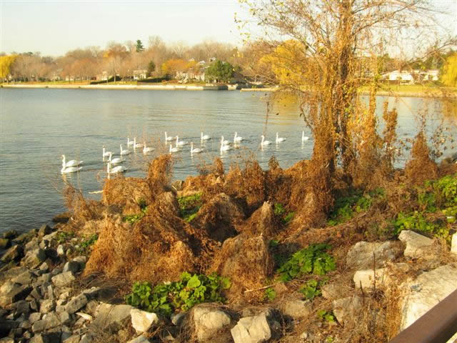 21 - LaSalle Park Fall 2006 006.jpg