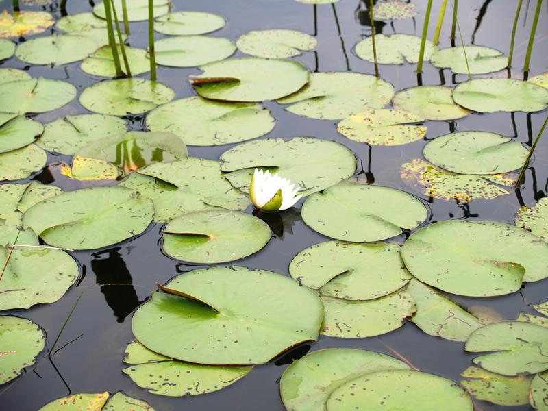 8 - One Lotus P1015446.jpg