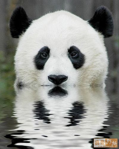 Kung-fu Panda and His Friends – in Cute Images!