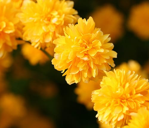 Blossom Time and Cooperation with Seekers is Giving HOPE for COOL BREEZE of Yoga Realization (Munich, Nepal,Thailand)