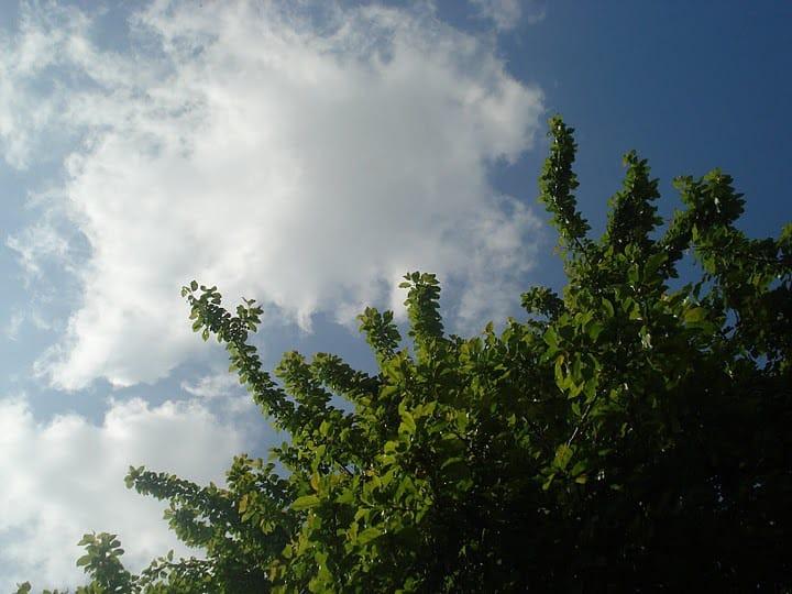Sky -Cloud-Tree-Romania from Mihaela