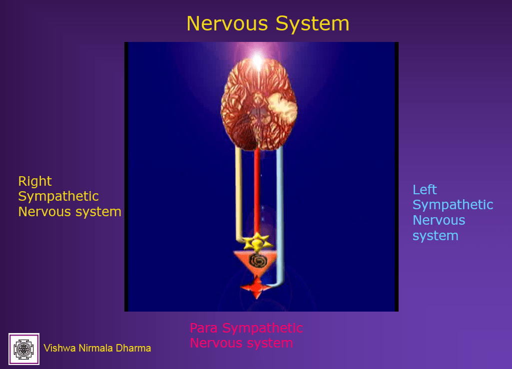 left - Right Sympathetic Nervous system
