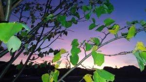 Awaken the Detached Yogi in Oakville – Wisdom and Photos