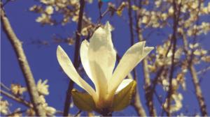 Forgiveness Recorded Meditation ENGLISH SPANISH Special Program
