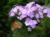 23 - Flowers with Butterfly _1015029.jpg
