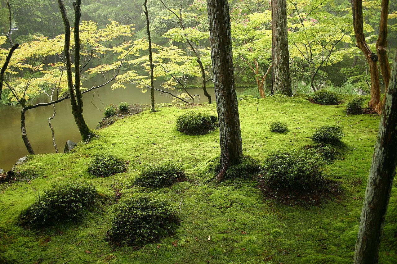 Moss garden -source wikipedia