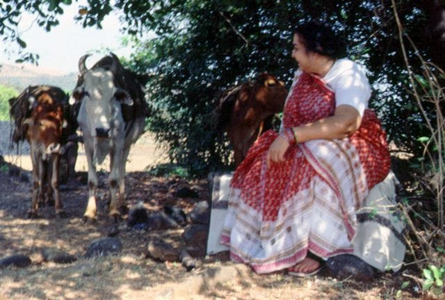 Shri Mataji enjoying the company of village's cows