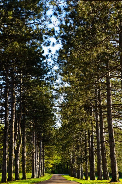 Trees in USA -Middle Path -by Omar