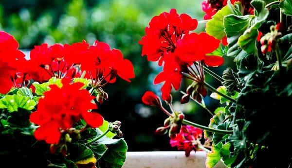 Flowers-Cabella-Omar