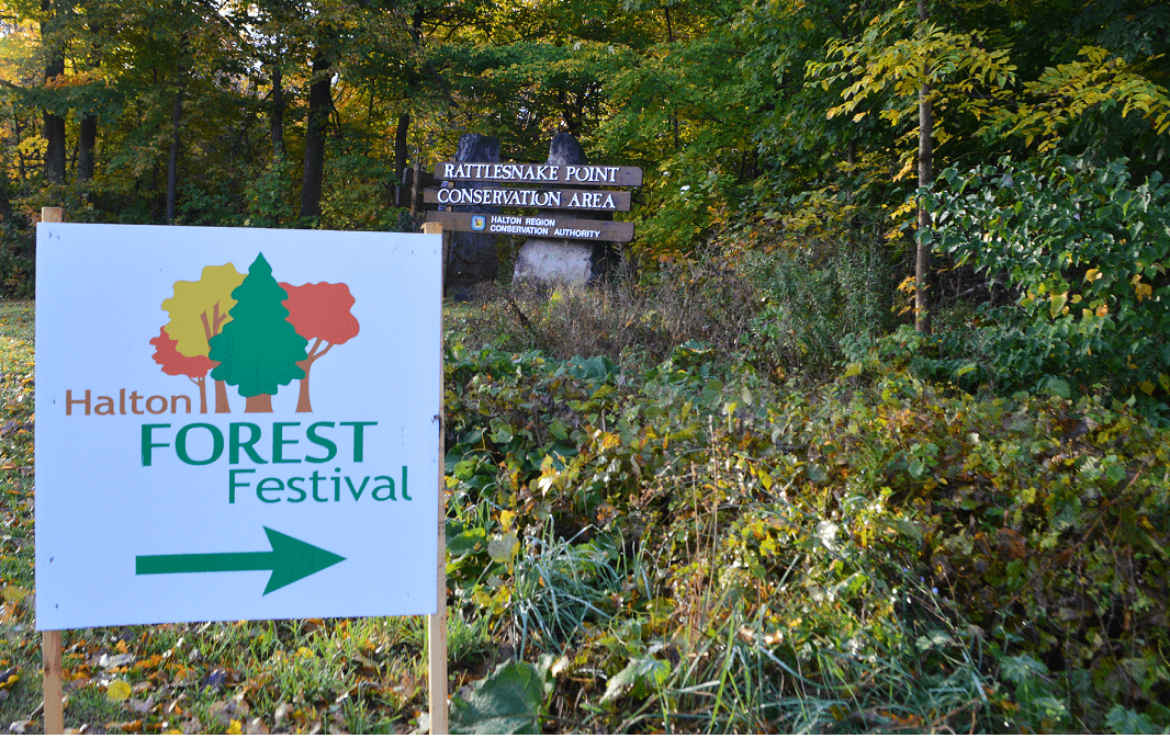 Haton Forest Festival- Entrance 1